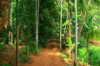 savoi-spice-plantation_gallery_1-1